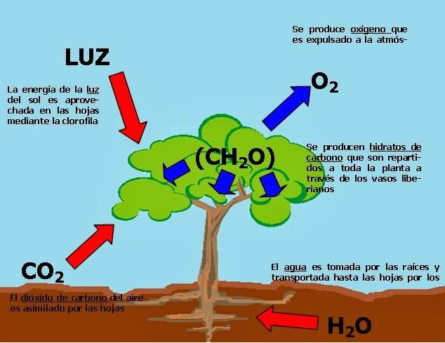 Crecemos aprendiendo tema 4 las funciones vitales en for Funcion de las plantas ornamentales
