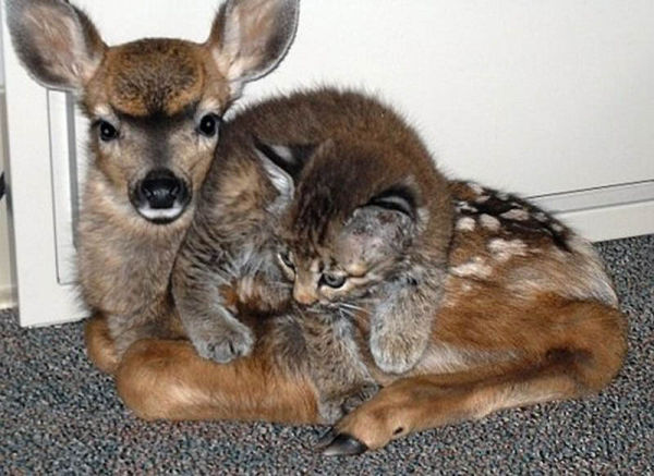 most adorable animal pairings best animals friends cute animals