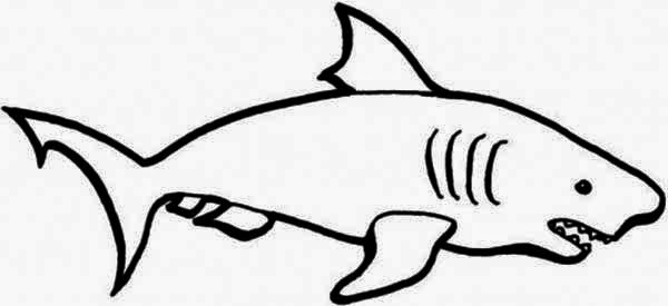 Coloring Pages Of Real Sharks