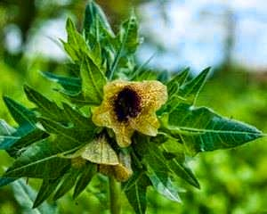 şifalı bitkiler, doğal bitkiler, şifalı doğal bitkiler, sağlıklı beslenme, sağlık, sağlıklı yaşam,
