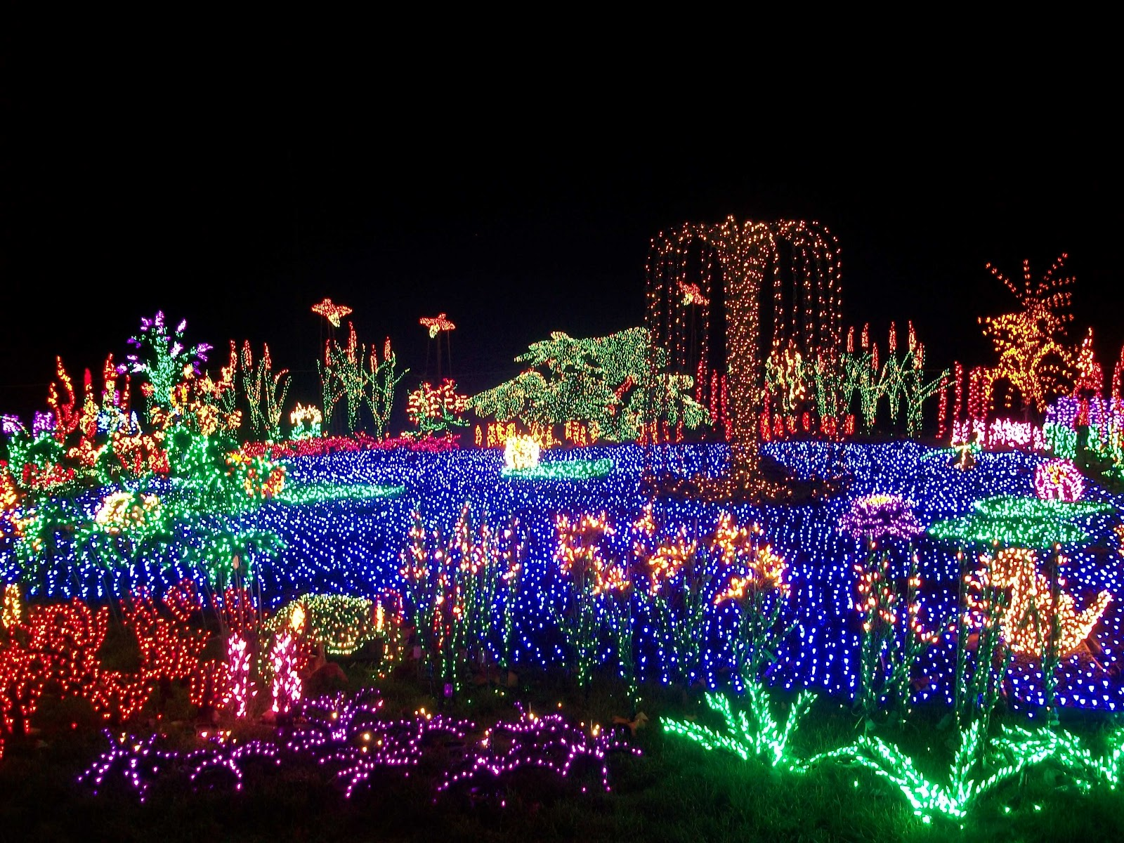 Indie grace wanderer bellevue botanical gardens holiday for Holiday lights botanical gardens