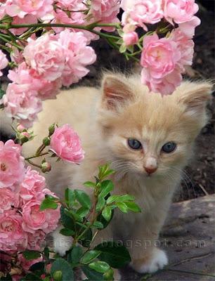 gambar kucing comel