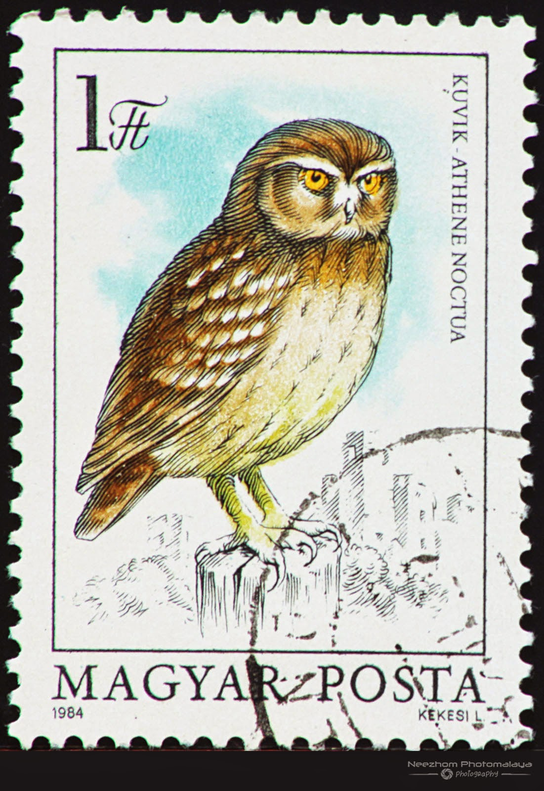 hungary 1984 owl series stamps stamps gallery
