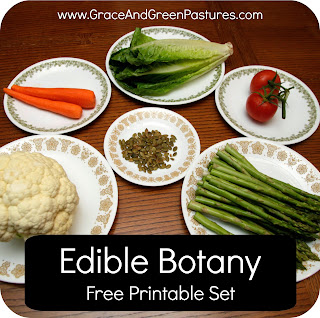 Edible Botany