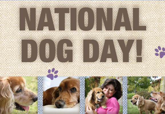 National Dog Day 26th 2015