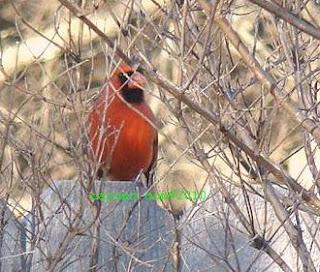 Central Texas bird in natural habitat