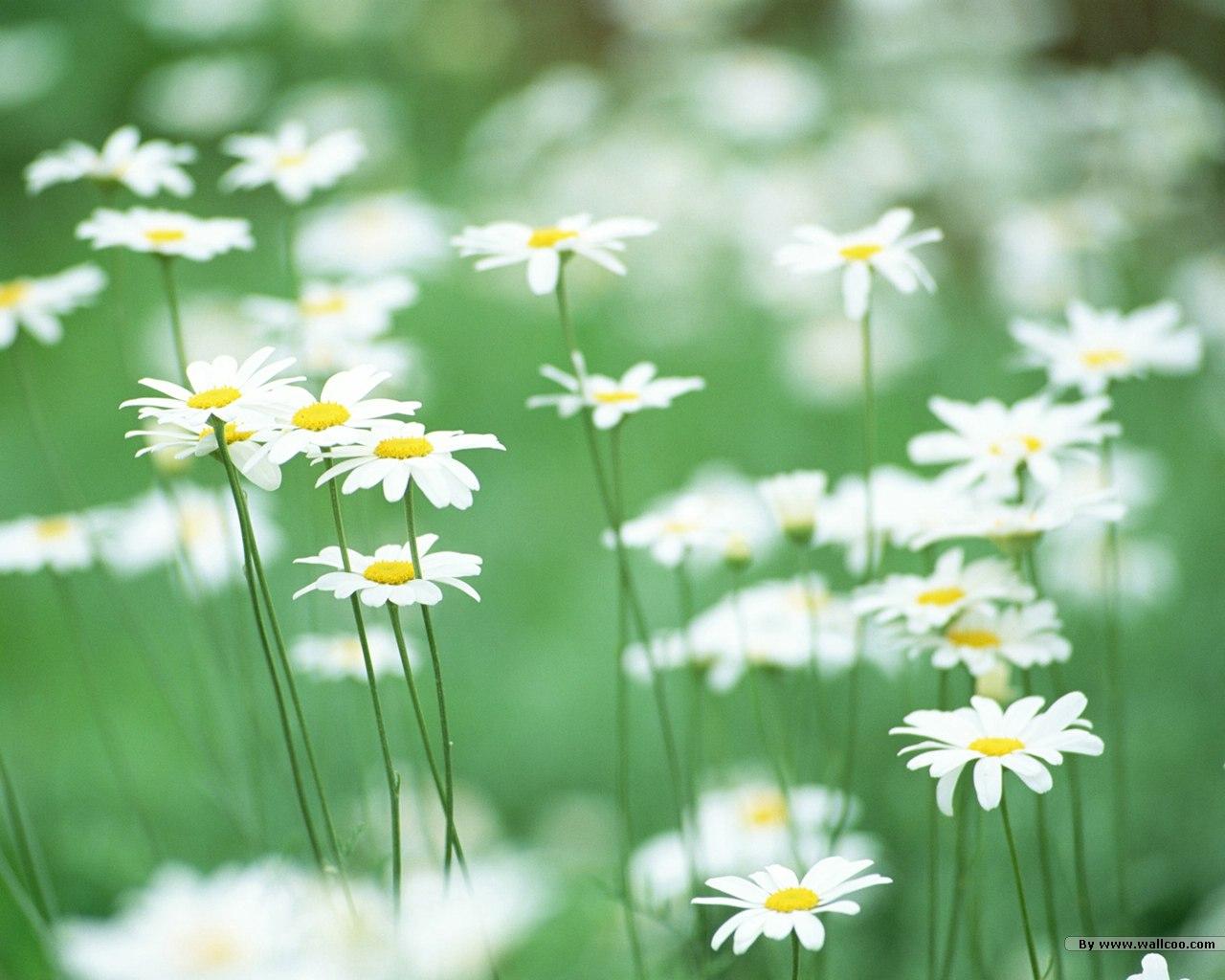 http://2.bp.blogspot.com/-tODJuwHvHP4/UBNvR-3R5FI/AAAAAAAAAls/nH6Xfx_GsAk/s1600/sweet_wildflower_JK010_350A.jpg