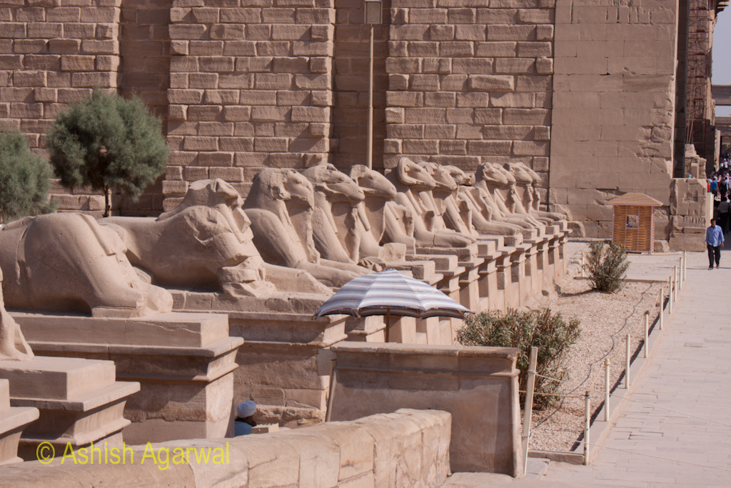 Umbrella among the row of giant Sphinx statues at the gate of the Karnak temple in Luxor