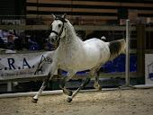 Salon du cheval, Lyon 2008