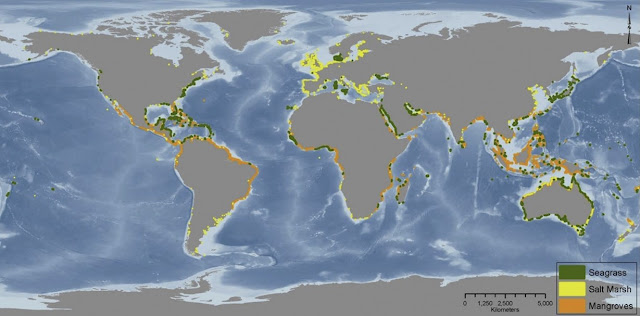 Map of Mangrove losses contributed