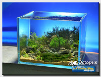 Background Layouts For Aquarium1