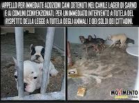 cani canile adozioni Sarno Salerno