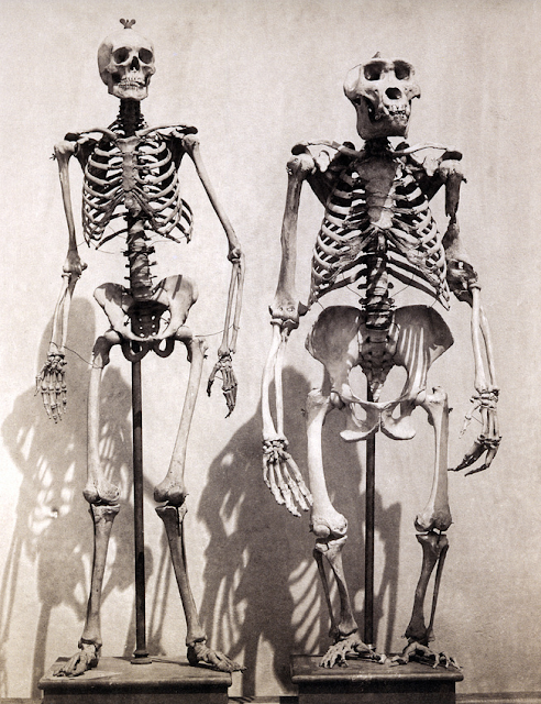 strawberige: roger fenton, Skeleton