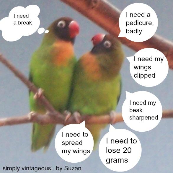 love birds,humour