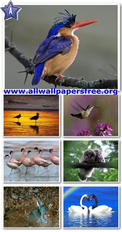50 Beautiful Birds Wallpapers 1280 X 1024 [Set 5]