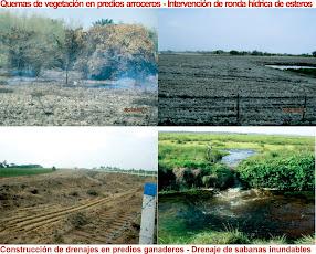 RESPONSABILIDADES CON EL DESASTRE AMBIENTAL EN CASANARE