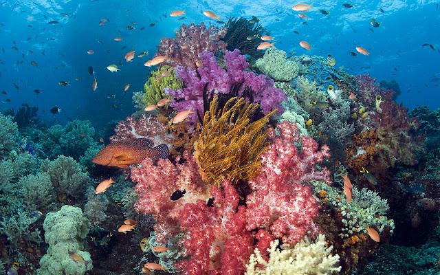 Imagenes de Lindos Peces en Arrecifes de Coral