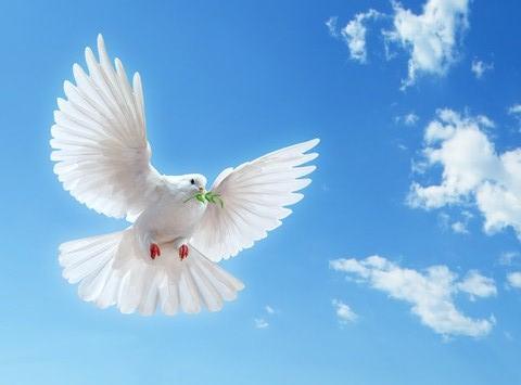 Coeur de pigeon