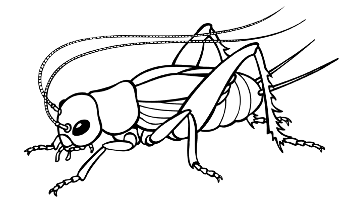"Free Coloring Pages: Animal "" Cricket "" Printable Coloring ..."