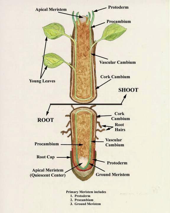 plant cell diagram 6th grade