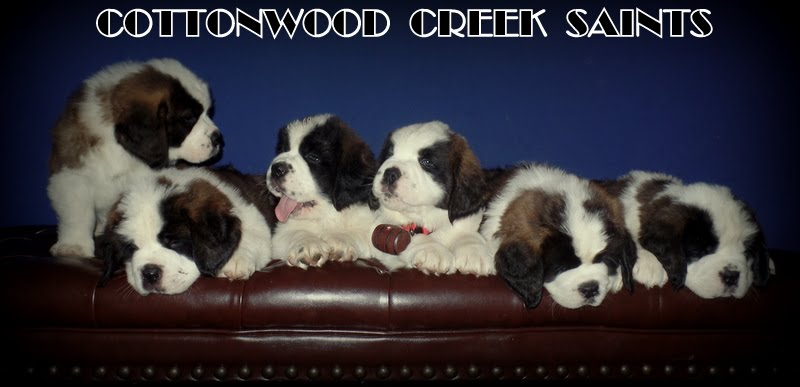 KANDY'S PUPS 7 WKS OLD