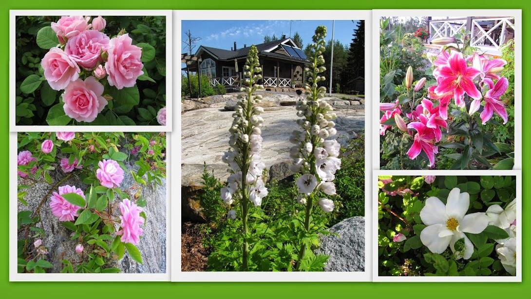 Sagas trädgård