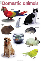 Domestic Animals, Animals, Animal Farms