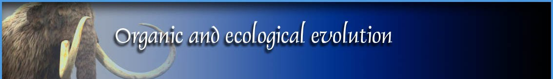 Macroecology and Evolutionary Biology