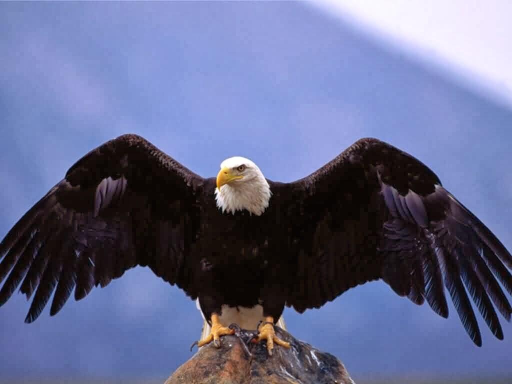 eagles - photo #3