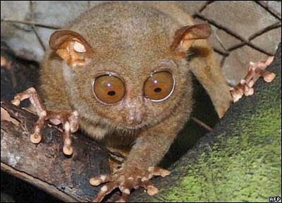 5 Hewan dengan Mata Aneh dan Uniknya- raxterbloom.blogspot.com
