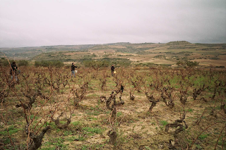 Rioja vineyard.