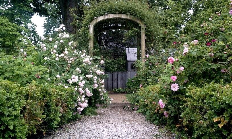 Wyck Rose Garden