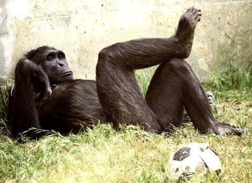 Wonderful animals: The Bonobo lifestyle
