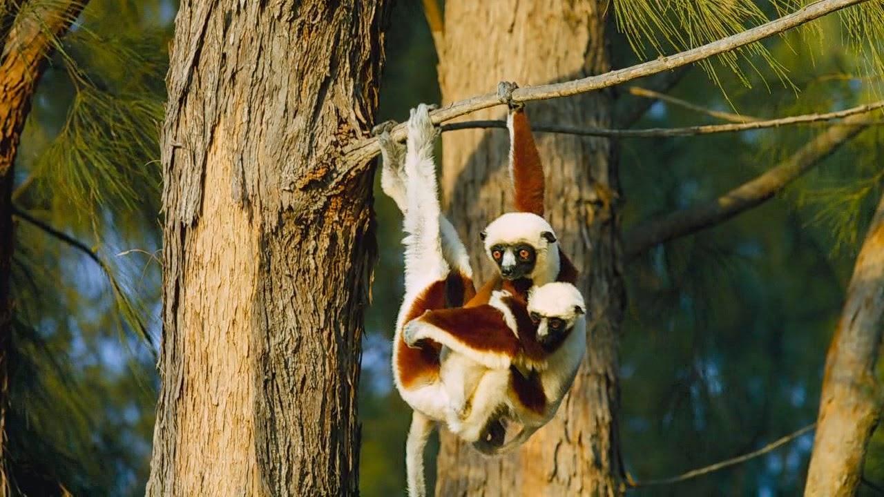 Madagascar, isla de lémures (2014) 720p BDRip Dual