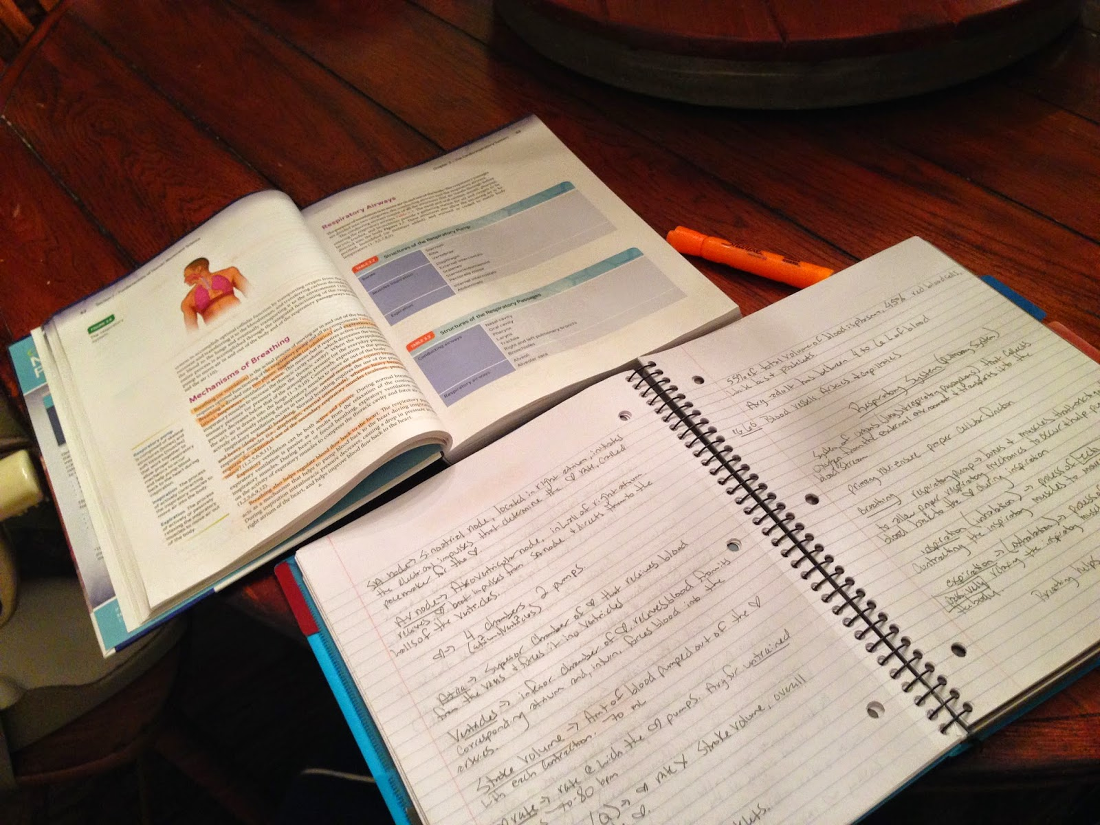 Nasm cpt exam study guide and discount red head on the run 1betcityfo Choice Image