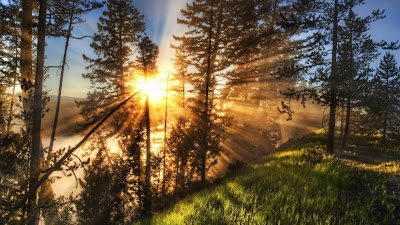 HD Nature Wallpaper sun in forest