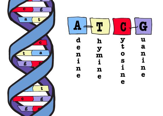 hur är dna molekylen uppbyggd