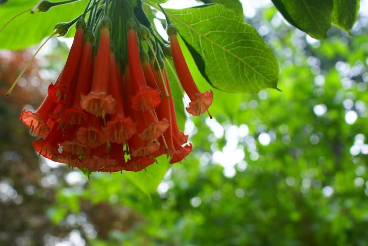 Flor colgante