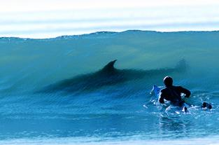 chasing mavericks, surf movie, scary, shark, great white, poo my pants