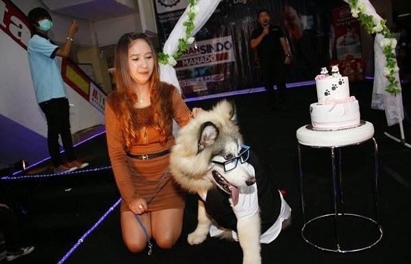 Cô dâu alaska Yipa bên cạnh cô chủ