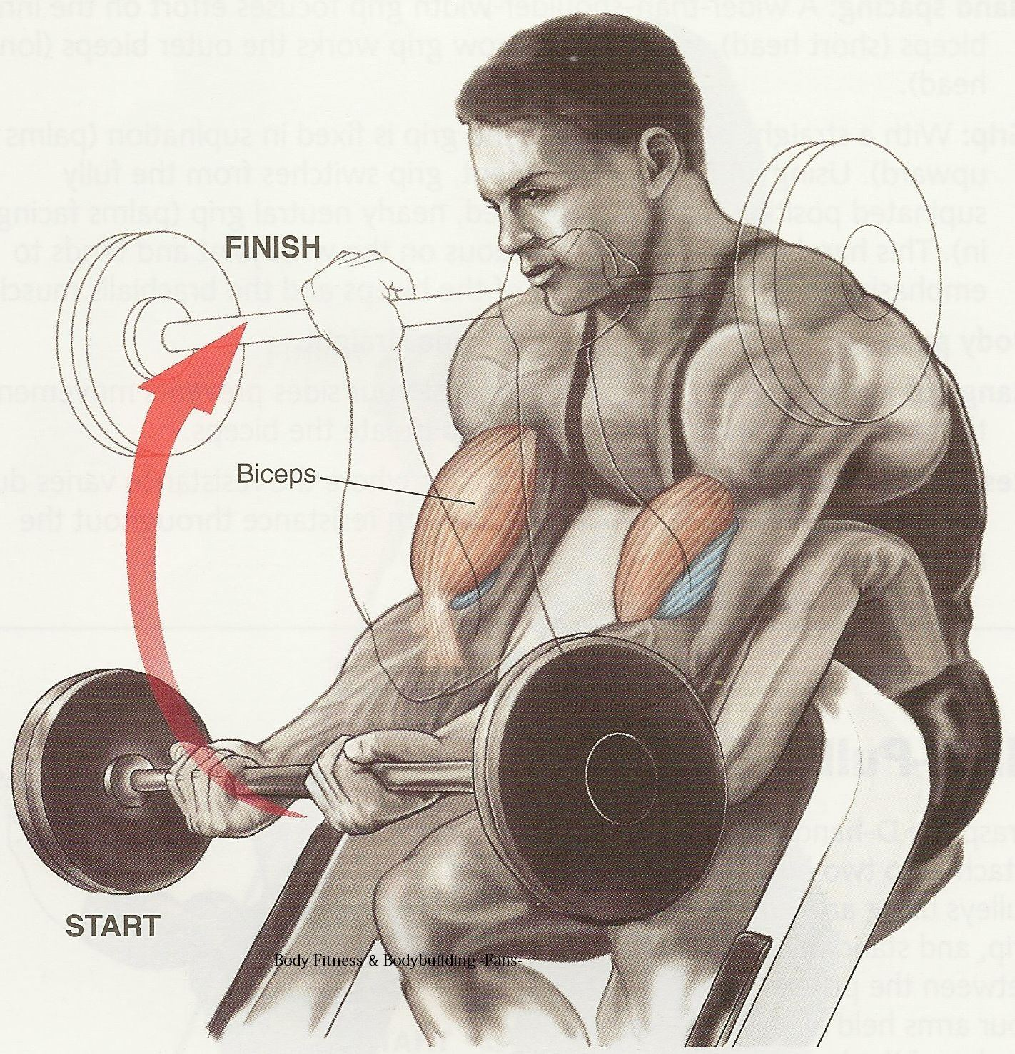 Best Bicep Workout Routine