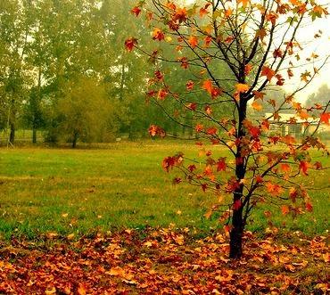 Cuando las hojas caigan...