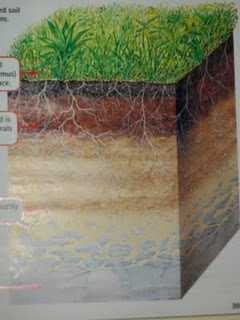 Welcome to watkins 39 wild west layers of soil for Top layer of soil