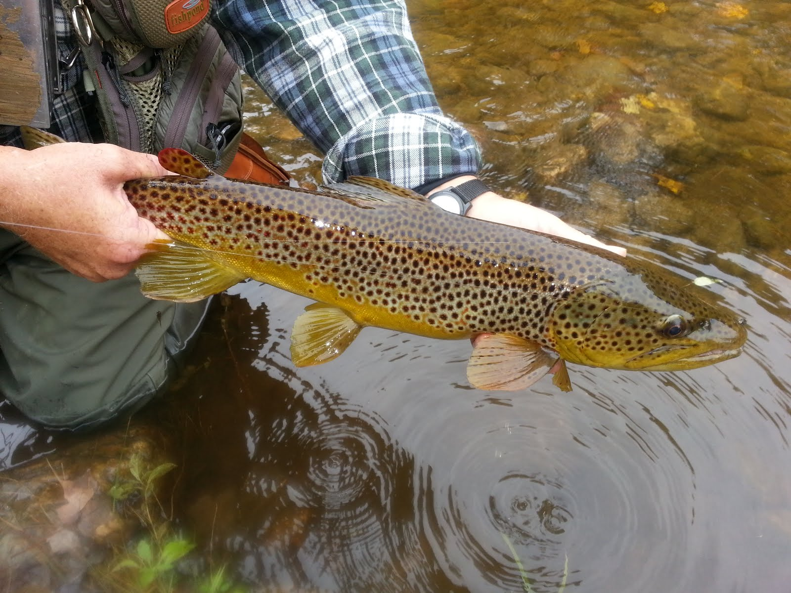Vermont fly fishing november 2012 for Vermont trout fishing