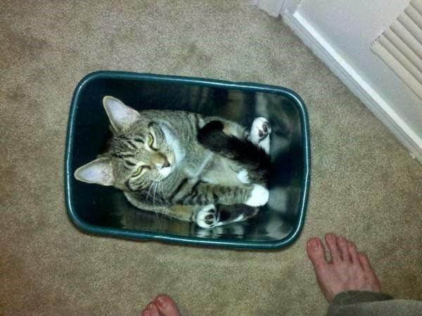 gato atorado en bote de basura