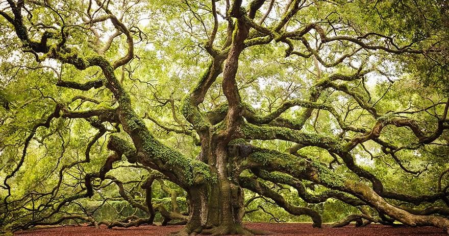 Rengarenk Ağaçlar