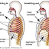 Diaphragmatic Breathing: Functional Patterns