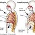 Diaphragmatic Breathing: Functional Patterns