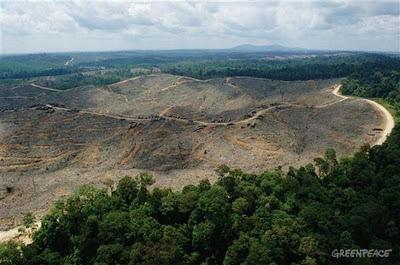 Penghancur Kehidupan Alam Kehancuran hutan sumatera Indonesia