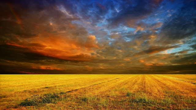 Cloudy Sunset Cornfield HD Wallpaper